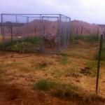 Fertilize that soil, till it up... work slave goat! Work!